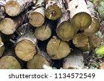 firewood background ... | Shutterstock . vector #1134572549