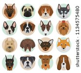 different dogs breeds muzzles... | Shutterstock .eps vector #1134575480
