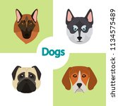 different dogs breeds muzzles... | Shutterstock .eps vector #1134575489