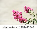 colorful flowers in the garden... | Shutterstock . vector #1134619046