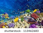 Coral And Fish In The Red Sea...