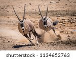 two oryx running in the namib... | Shutterstock . vector #1134652763