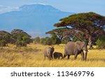 elephant family   kilimanjaro | Shutterstock . vector #113469796