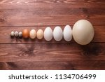 Egg Of Different Birds On A Farm