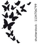black butterfly  isolated on a... | Shutterstock .eps vector #1134706799
