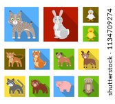 toy animals flat icons in set... | Shutterstock .eps vector #1134709274