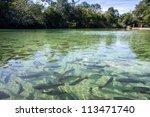 Clear River In Bonito  Brasil