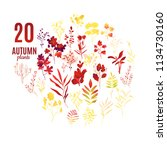 autumn plants and leaves set... | Shutterstock .eps vector #1134730160
