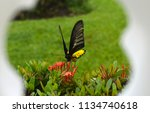 tropical yellow and black... | Shutterstock . vector #1134740618