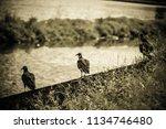 the watchers of death   Shutterstock . vector #1134746480