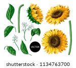 Sunflowers Isolated On A White...
