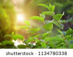 autumn leaf in the morning.... | Shutterstock . vector #1134780338