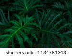 tropical leaves pattern. green... | Shutterstock . vector #1134781343