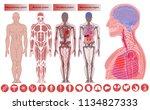 human body anatomy  medical... | Shutterstock .eps vector #1134827333
