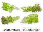 lettuce leaves isolated on... | Shutterstock . vector #1134833930