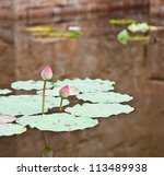 Couple Of Lotus In A Pond Of A...