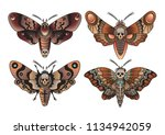 moth set traditional tattoo... | Shutterstock .eps vector #1134942059