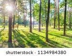 wooden bench in beautiful green ... | Shutterstock . vector #1134984380