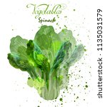 spinach salad leaves watercolor ... | Shutterstock .eps vector #1135031579