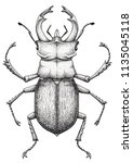stag beetle tattoo art. lucanus ... | Shutterstock . vector #1135045118
