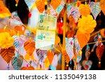 money tree for good luck... | Shutterstock . vector #1135049138