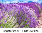 provence  france. close up... | Shutterstock . vector #1135050128