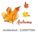 three watercolor autumn maple...   Shutterstock . vector #1135077536