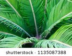 green tropical leaves texture... | Shutterstock . vector #1135087388