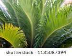 green tropical leaves texture... | Shutterstock . vector #1135087394