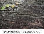 leaf creeping on the big  tree. | Shutterstock . vector #1135089773
