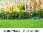 beautiful green garden with...   Shutterstock . vector #1135100180