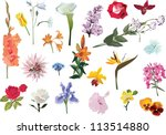 illustration with flowers... | Shutterstock .eps vector #113514880