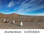 colony of magellanic penguins... | Shutterstock . vector #113518264