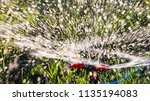 splashing water to water the... | Shutterstock . vector #1135194083