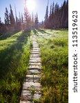 boardwalk in forest   Shutterstock . vector #113519623