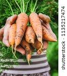 organic homemade vegetables in... | Shutterstock . vector #1135217474
