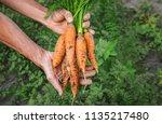 organic homemade vegetables in... | Shutterstock . vector #1135217480