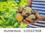 organic homemade vegetables in... | Shutterstock . vector #1135227608