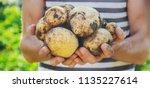 organic homemade vegetables in... | Shutterstock . vector #1135227614