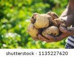 organic homemade vegetables in... | Shutterstock . vector #1135227620