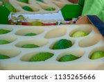 etrog  yellow citron  is on... | Shutterstock . vector #1135265666