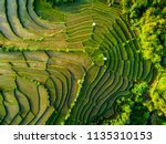 Aerial View Of Rice Field...