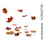 Autumn Falling Leaves With...