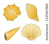 set of seashells isolated on... | Shutterstock .eps vector #1135347800