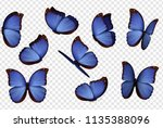 Stock vector butterfly vector purple isolated butterflies insects with bright coloring on transparent 1135388096
