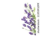 lavender flowers on white...   Shutterstock . vector #1135391099
