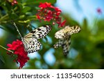 Two Paper Kite Butterflies...