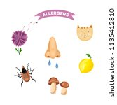 allergy symptoms  reactions and ... | Shutterstock .eps vector #1135412810