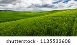 rolling hills  endless green... | Shutterstock . vector #1135533608