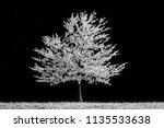 blossoming cherry tree ... | Shutterstock . vector #1135533638